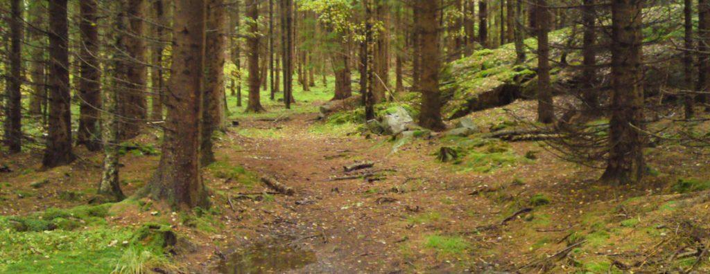 hostmys-i-skogen